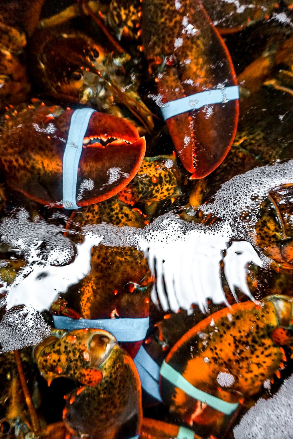 tank of fresh lobster