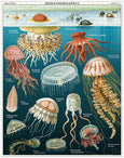 Cavallini & Co. Jellyfish 1000 Piece Puzzle