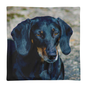 Premium Pillow Case, black dachshund close-up-Dachshund-Local Webstore