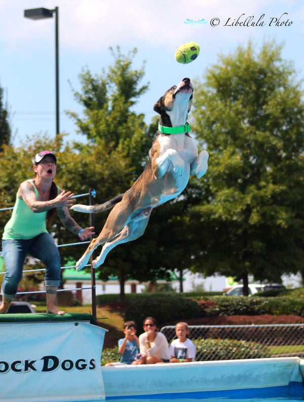 Canine Aquatics Competition - Nathan Jr. Soars!