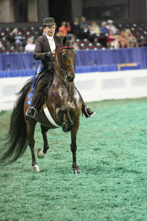 Saddlebred World Championships Day 1