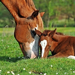 Equine Health Care Supplements