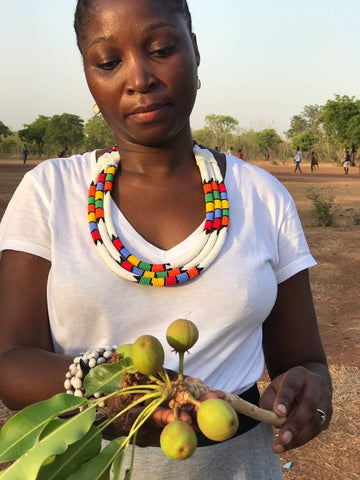 Picking shea nuts in Ghana to produce unrefined shea butter