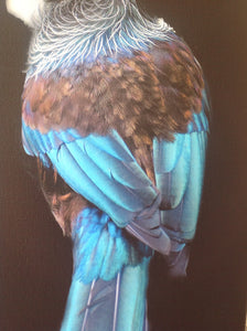Photographic Art - Tui by Fairlie Atkinson (canvas)