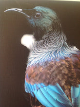 Load image into Gallery viewer, Photographic Art - Tui by Fairlie Atkinson (canvas)