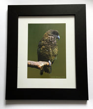 Load image into Gallery viewer, NZ Art : Kea - Fairlie Atkinson
