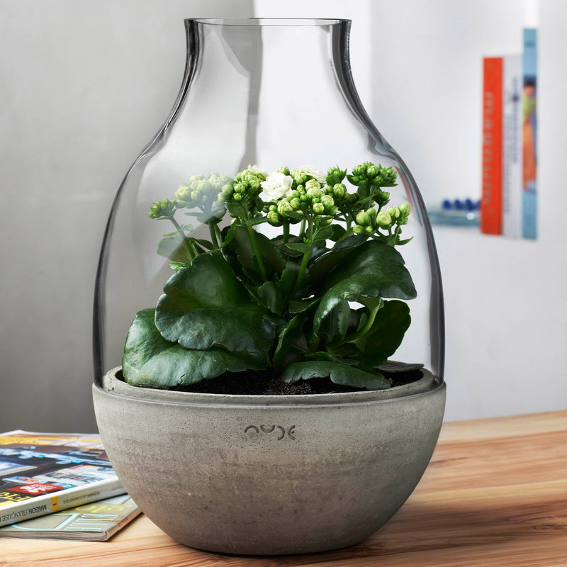 Eden@Mini Terrarium Clear with Moulded Concrete Base