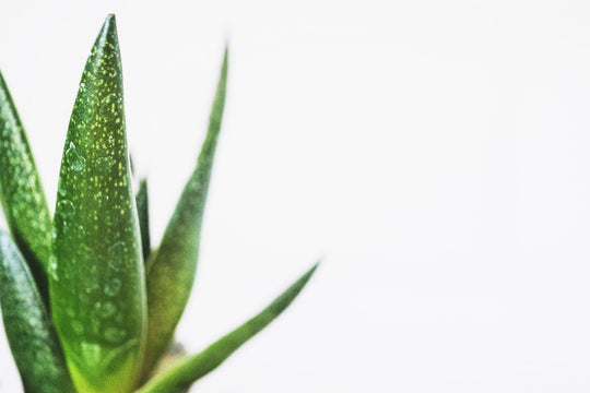 Aloe Vera : Interview d'une professionnelle