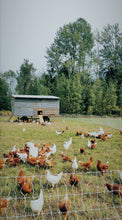 Load image into Gallery viewer, Pasture Raised - Free Range Eggs