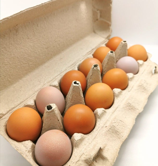 Pasture Raised - Free Range Eggs