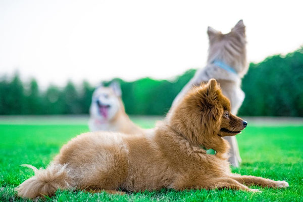 Dubai's First Urban Outdoor Dog Park