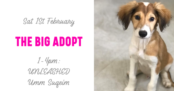 The Big Adopt: Adoption Day 1st Feb