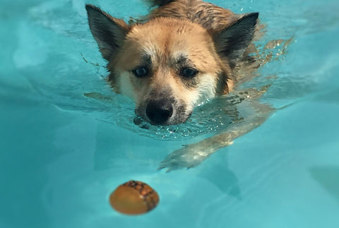 Beat The Heat-Dog Blog-Swimming