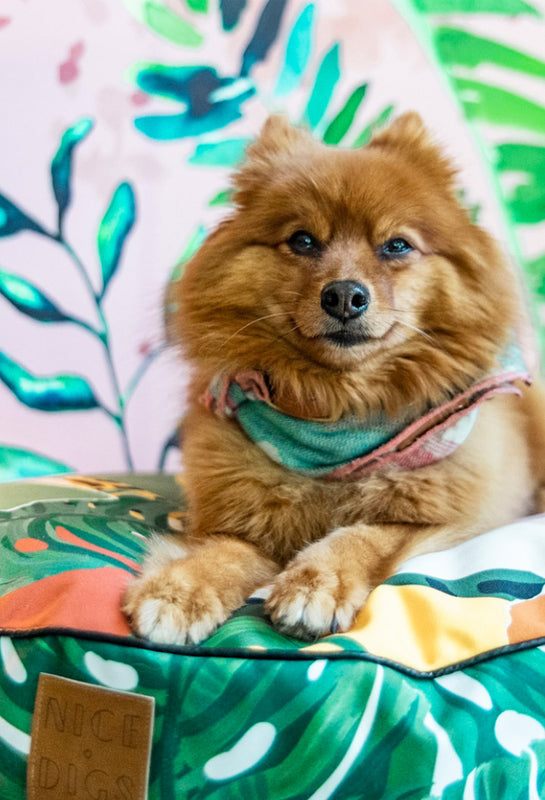 Howl & Growl - The UAE's First Luxury Boutique for Pets
