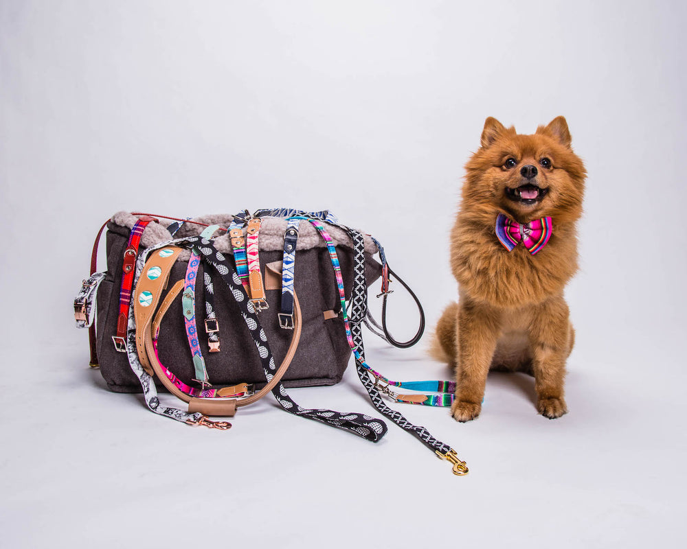 Dog & Cat Accessories Sale