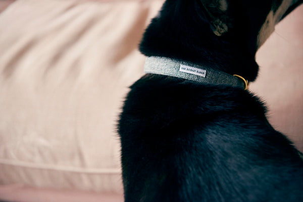 See Scout Sleep -Billie Jean Denim Collar-Lifestyle