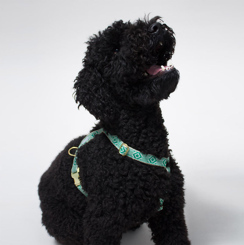 See Scout Sleep - Teal & Cream Harness - Lifestyle 2