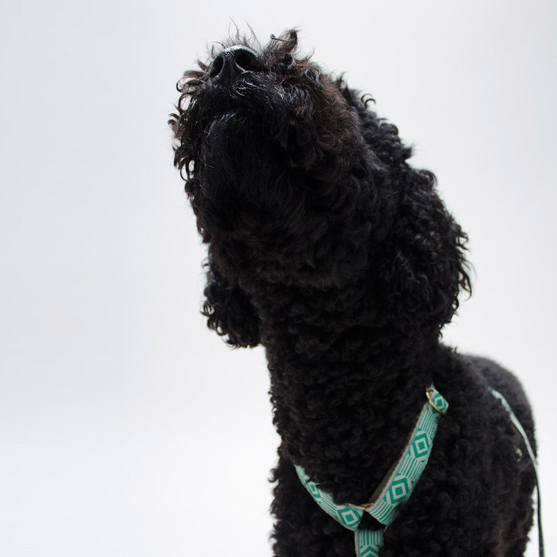 See Scout Sleep - Teal & Cream Harness - Lifestyle 3