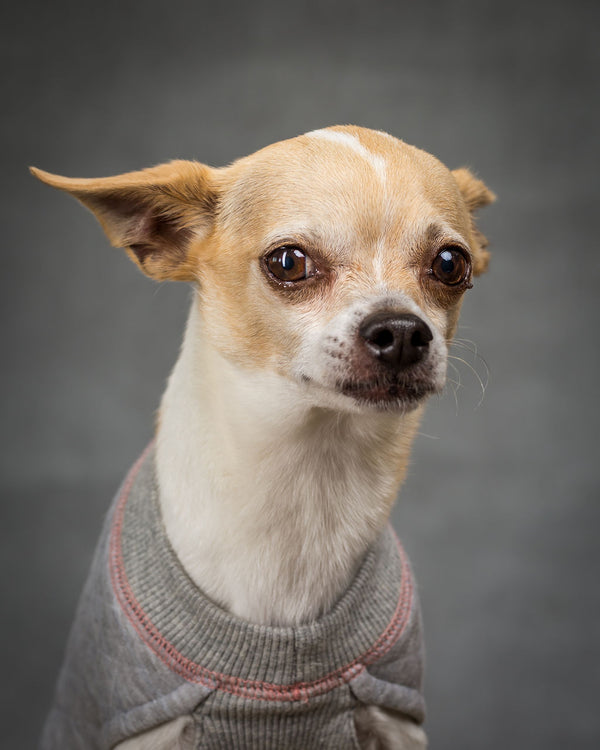 Chihuahua Dog Sweater