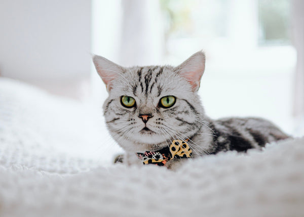 Hiro & Wolf - Pop Art Cat Collar-Silver Tabby