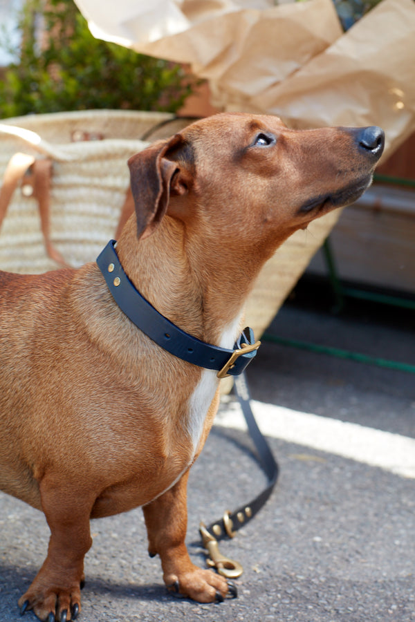 Fetch & Follow Navy Leather Dog Collar Lifestyle