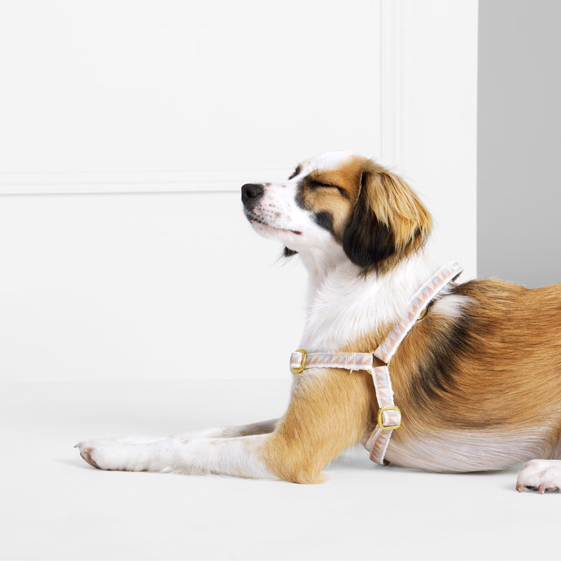 See Scout Sleep - Non Pull Harness - Lifestyle