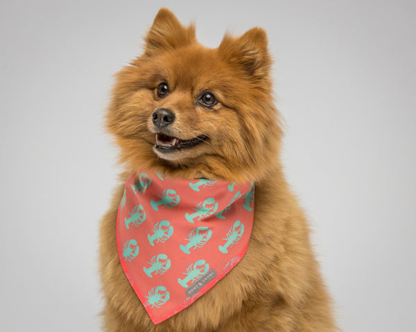 Howl & Growl-Dog Bandana-Lobster-Pomeranian