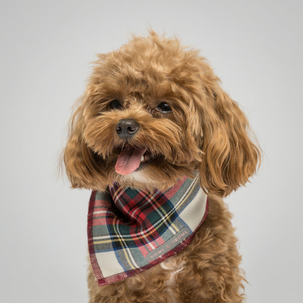 Howl & Growl-Cream Tartan Dog Bandana-Belle
