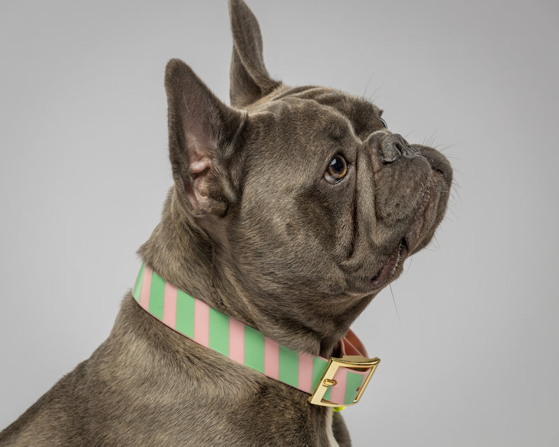 Howl & Growl-Think Pink Stripes-Dog Collar-Frenchie