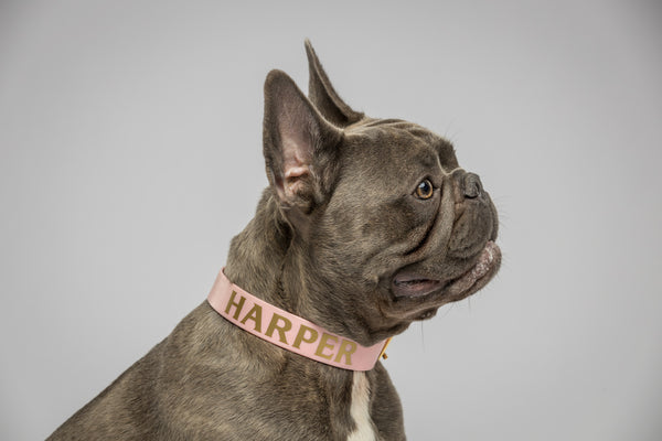 Think Pink Personalised Dog Collar-Frenchie