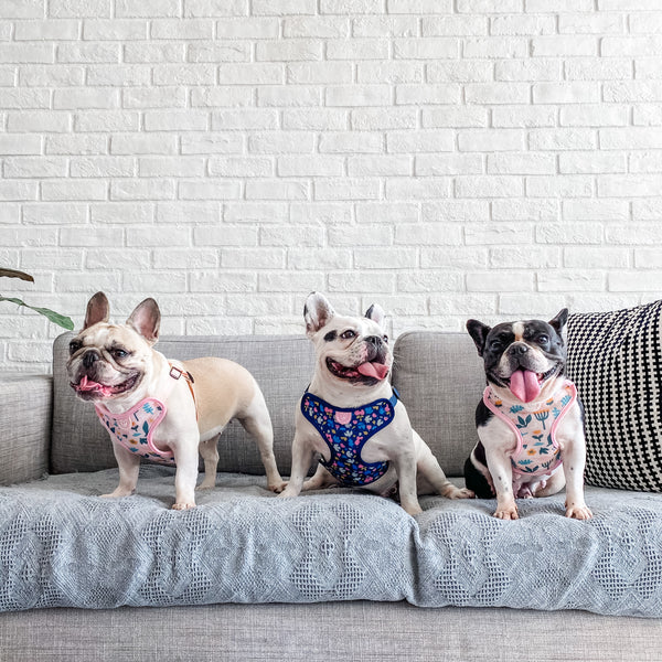 Gentle Pup Scandi Spring Dog Harness-Frenchies