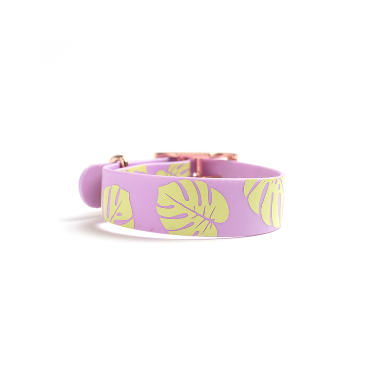 Miami Sky Dog Collar Monstera Leaf Back