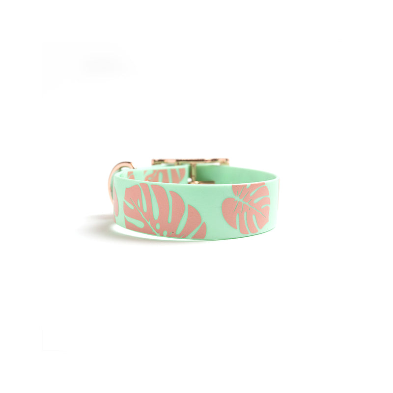 Seafoam Dog Collar-Monstera Leaf back