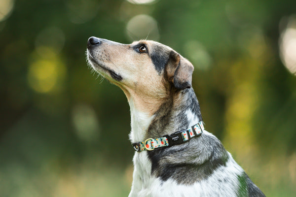 Gentle Pup-Dog Collar-Aloha Alice-Mixed breed