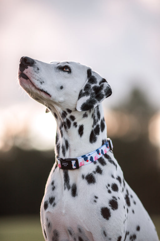 Gentle Pup Dog Collar Lovely Leia-Dalmatian