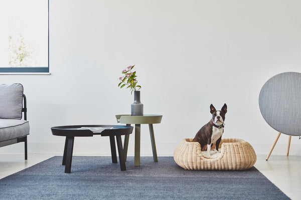 Mio Wicker Dog Basket - Lifestyle