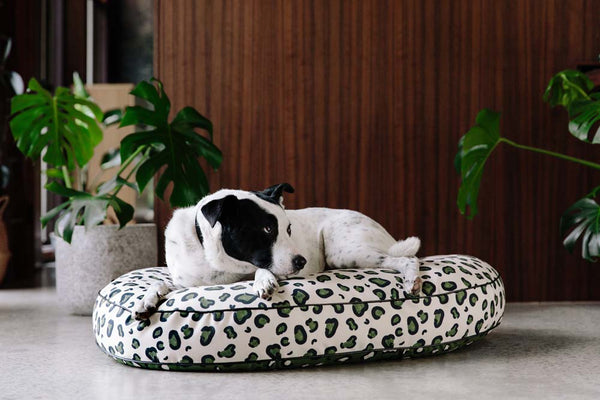 Nice Digs-Wild Thing Dog Bed-White Green