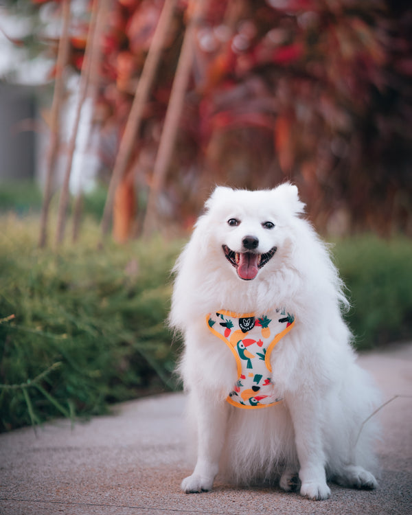 Gentle Pup-Dog Harness-Aloha Alice-Spitz