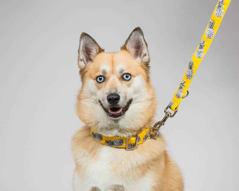 Prunkhund-Pineapple Yellow Dog Collar-Husky