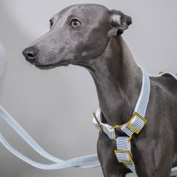 Prunkhund-Riviera Blue Dog Harness-Greyhound