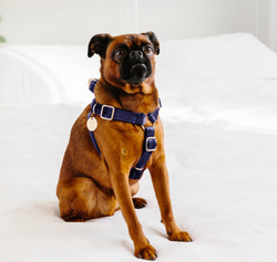 Velvet Non-Pull Dog Harness-Midnight