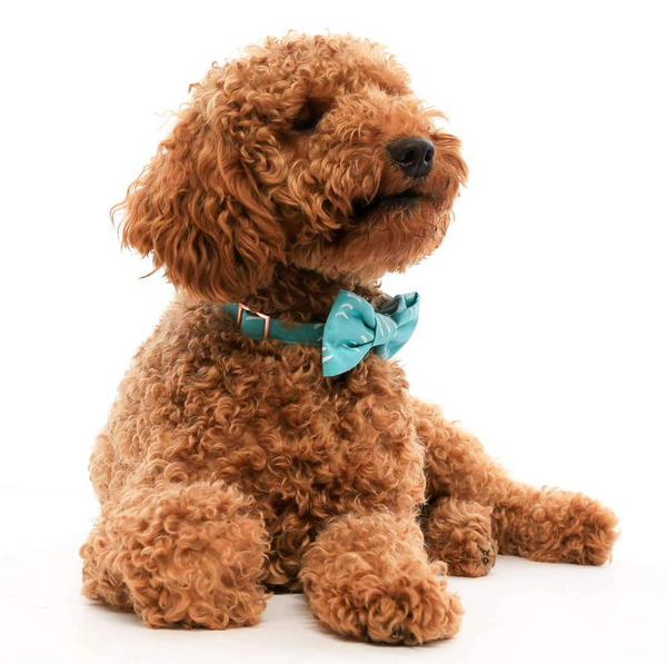 Aqua Waves Dog Bow Tie - Lifestyle