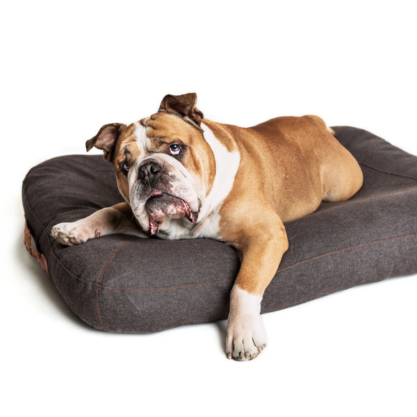 Dream Dog Bed