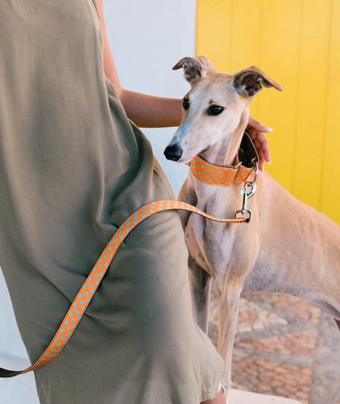 Brott-Pola Martingale Dog Collar-Greyhound