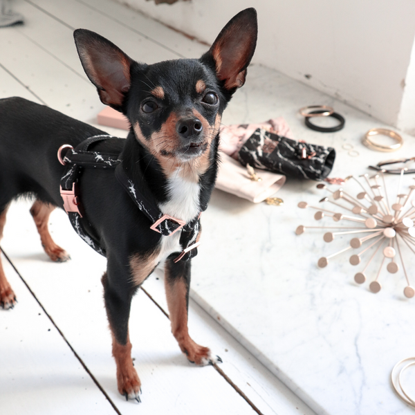 Black Marble Dog Harness-Lifestyle