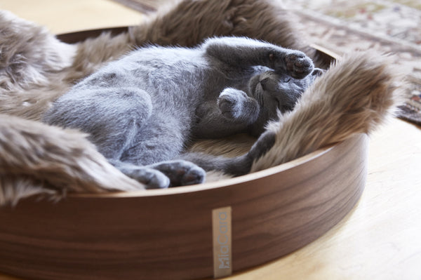 Anello Cat Basket-lifestyle