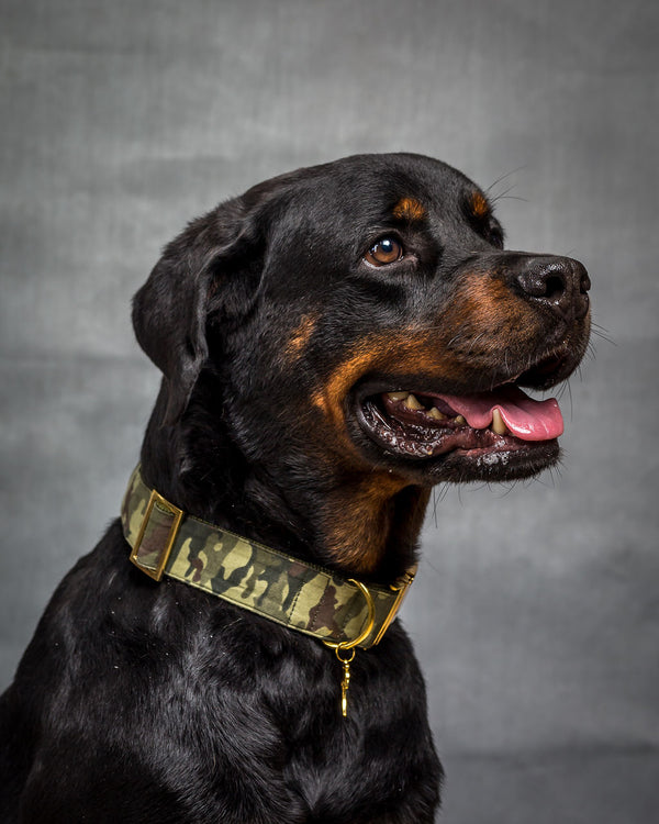 Prunkhund-Rambo Dog Collar-Rottweiler