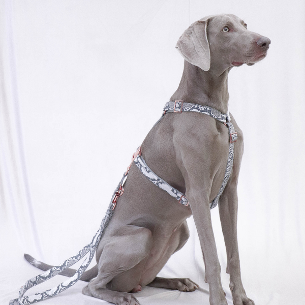 Prunkhund-Python  Dog Harness-Weimeraner