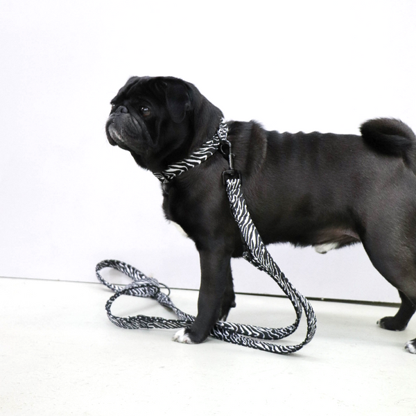 Prunkhund-Zebra Dog Lead-Pug