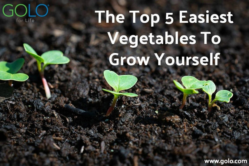 Top 5 Easiest Vegetables to Grow Yourself